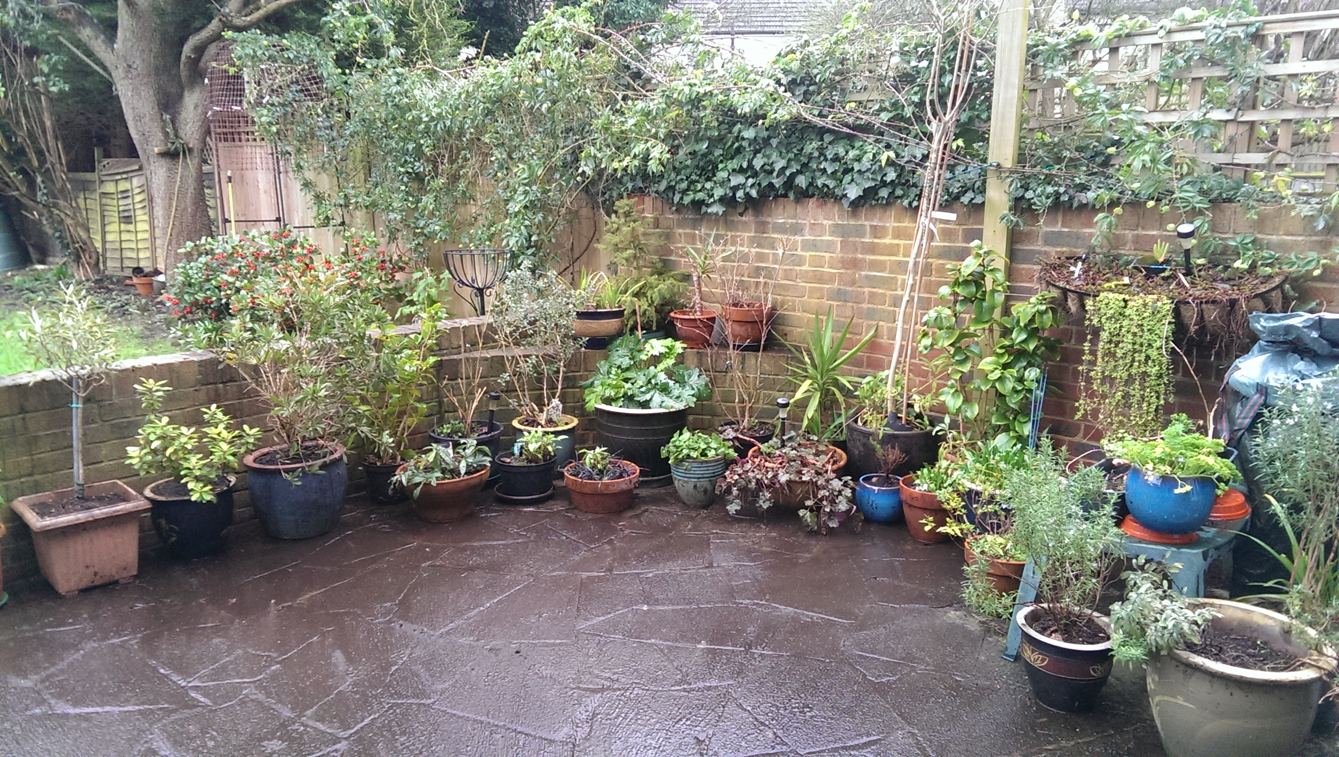 ... Potting On And Repotting, Pruning Winter Dead Material, Rescuing Dying  Grasses, Clearing Dead Leaves And Other Matter, And Rearranging The  Containers ...